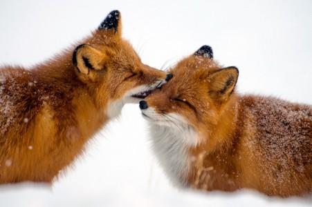 Animali che si amano