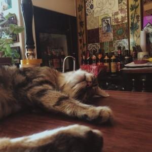 Un pub inglese popolato di gatti