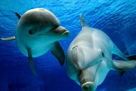 delfini-parlano