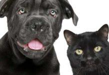 cani gatti