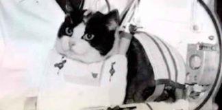 gatto felicette