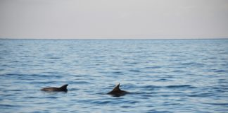 Dolphin Photo Identification Study (DolPhInS)