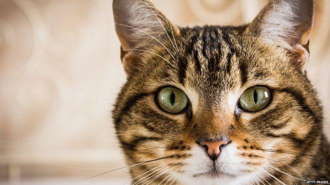 Come i gatti hanno conquistato il mondo antico