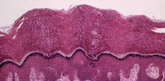 Scoperto un nuovo organo nell'essere umano: è l'interstizio