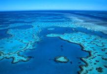 """La Grande Barriera Corallina australiana ha subito un """"crollo catastrofico"""" e rischia di scomparire"""