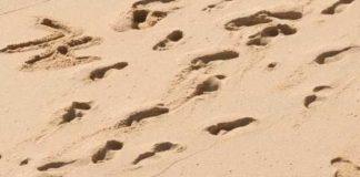 Gli scienziati scoprono orme umane di 13.000 anni in Canada