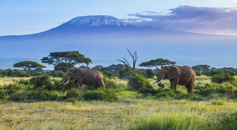 Le 10 nuove specie più interessanti scoperte nel 2017