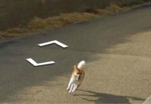 Google Maps: un cane insegue la Google Car e appare in tutte le immagini