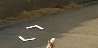 Google Maps: un cane insegue la Google Car e appare in tutte le immagini