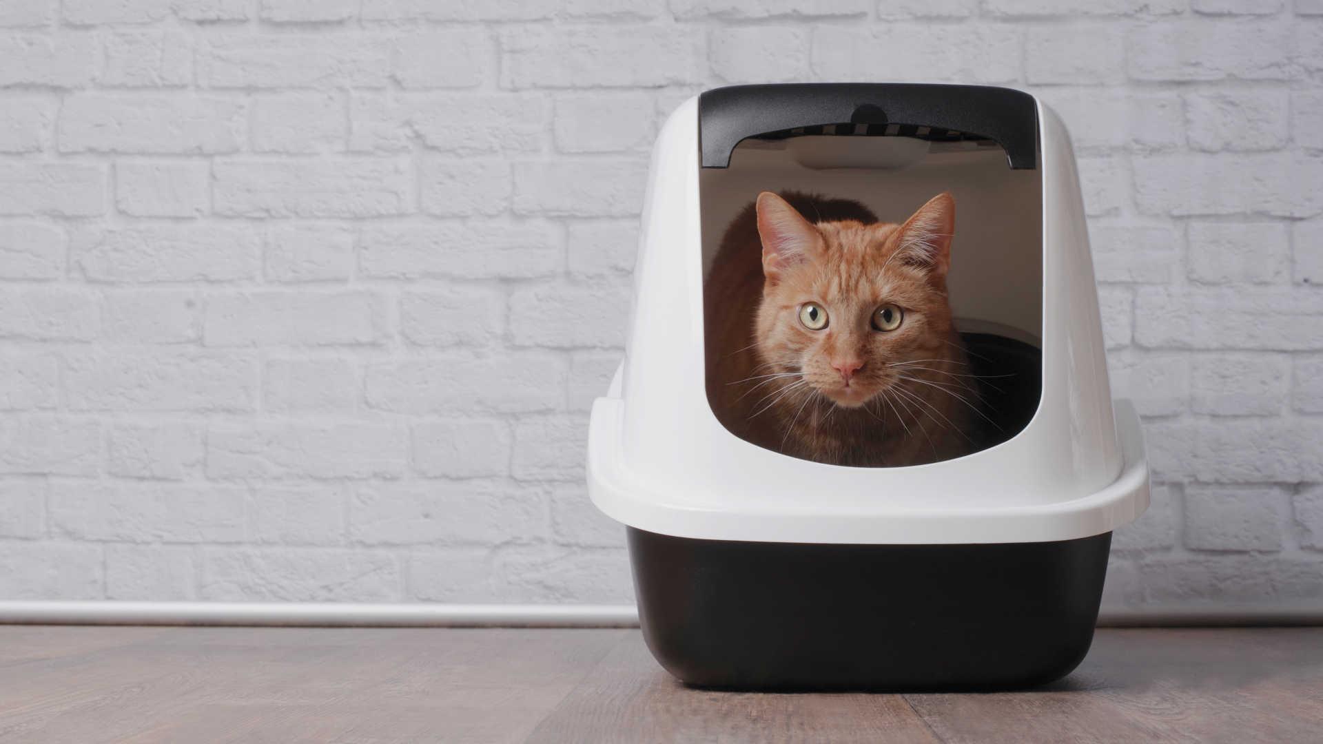 gatti-batteri