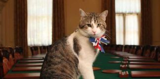 gatto-downing-street