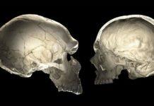 neanderthal-cervello