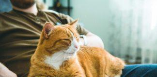 animali-domestici-benessere