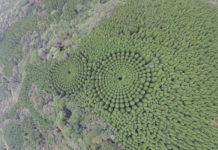 google-maps-alberi