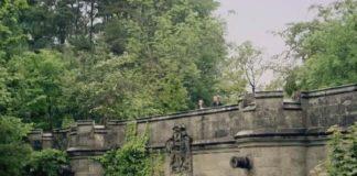 cani-ponte