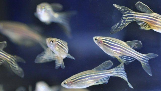 pesce-sonno