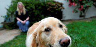 tumori-cani