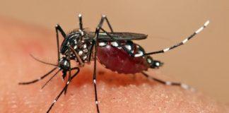 zanzare-eliminarle-completamente-studio