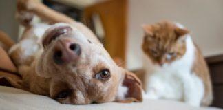 cani-gatti-ambiente