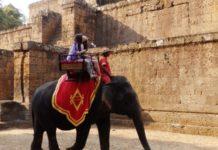 elefanti-cambogia