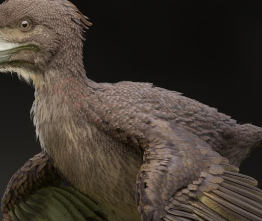 uccello-dinosauro