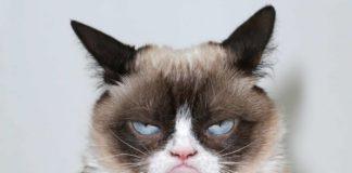 gatti-espressioni