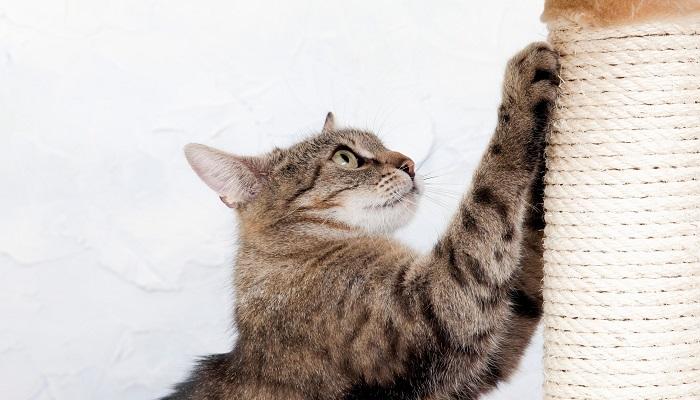 gatti-stivaletti-antigraffio-amazon