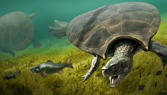 tartarughe-giganti-guscio-fossile