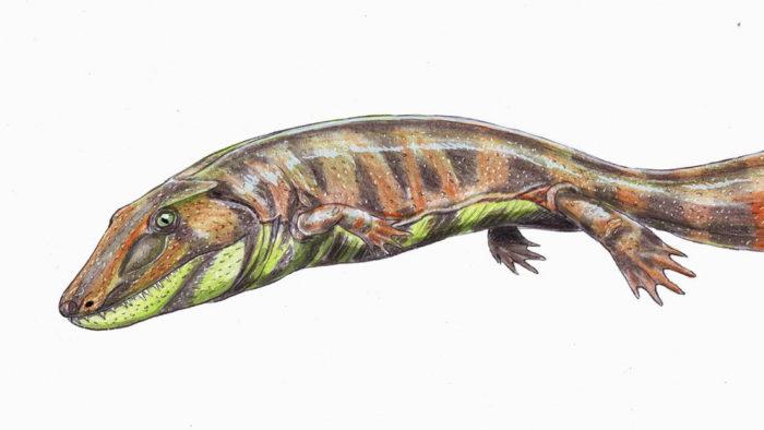 fossile-pesce
