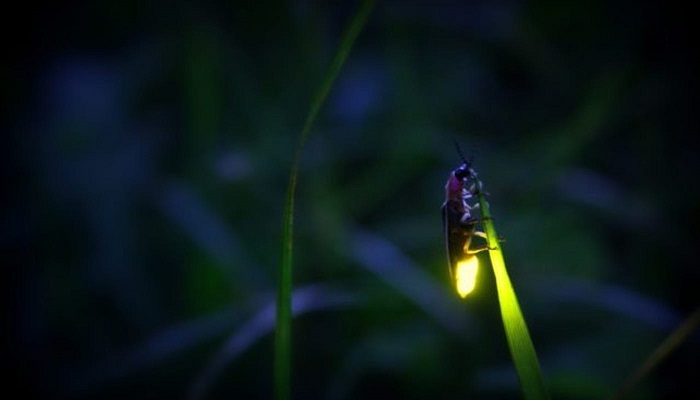 lucciole-insetti-morte-clima