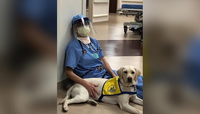 medici-infermieri-stress-cane