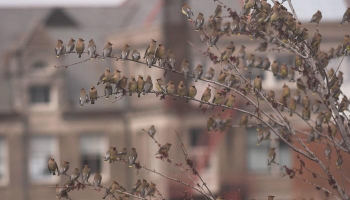 La strategia degli uccelli per sopravvivere: o un grosso cervello, o riprodursi velocemente